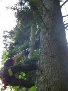 Überwald-Glocke bau